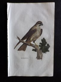 Brightly 1815 Antique Hand Col Bird Print. Hobby